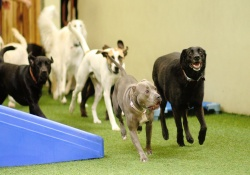 doggy day care with dog transportation in san francisco, california